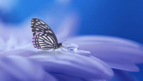 花についた雫を吸う蝶のイメージ