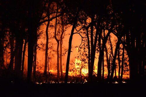 燃え盛る山火事の火