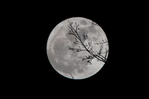 お月見十五夜満月