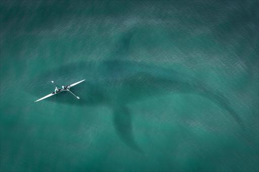 サメと出会うワンダーな旅