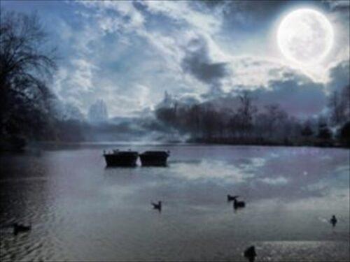 月明かりに浮かぶ小舟と水鳥たち