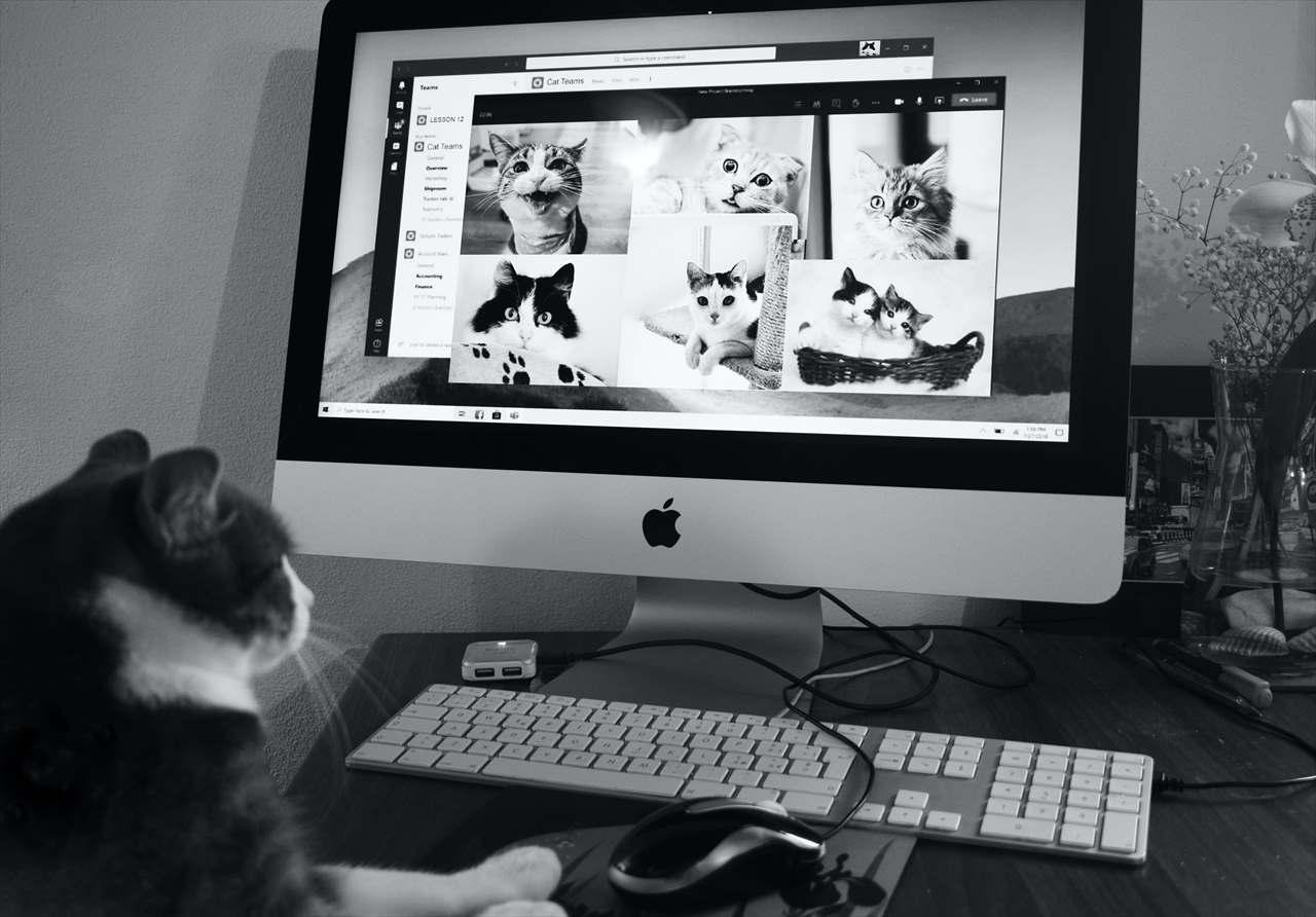 猫の画像を見つめる猫