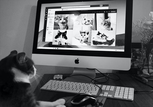 猫の絵本はいろいろあるにゃあ!