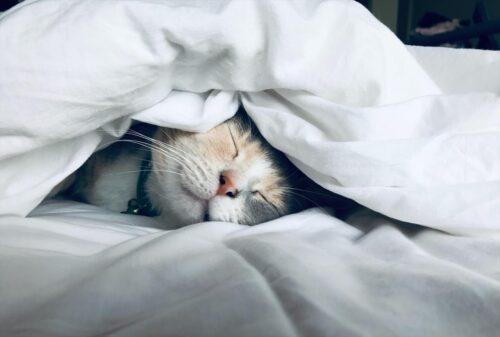 布団の中でまどろむ猫