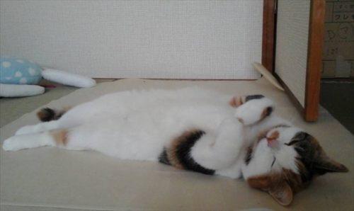 なまくら猫さん