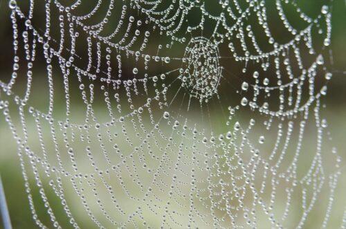 芸術的な蜘蛛の巣