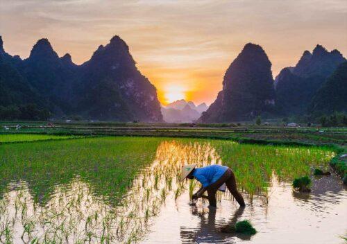 お米を育てる(田植え)