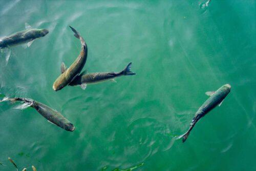魚の楽しみが分かるんだ