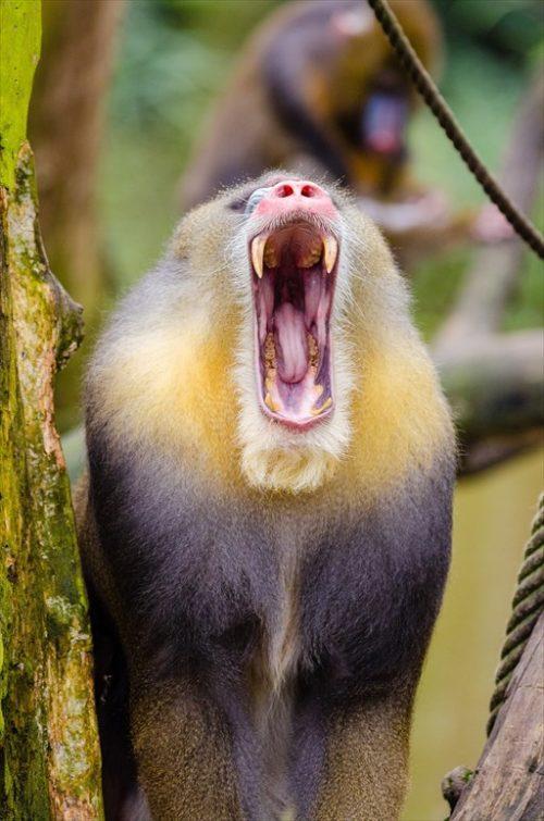 超おもしろい猿