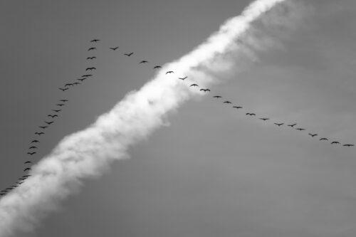 正確な渡り鳥たちの渡り