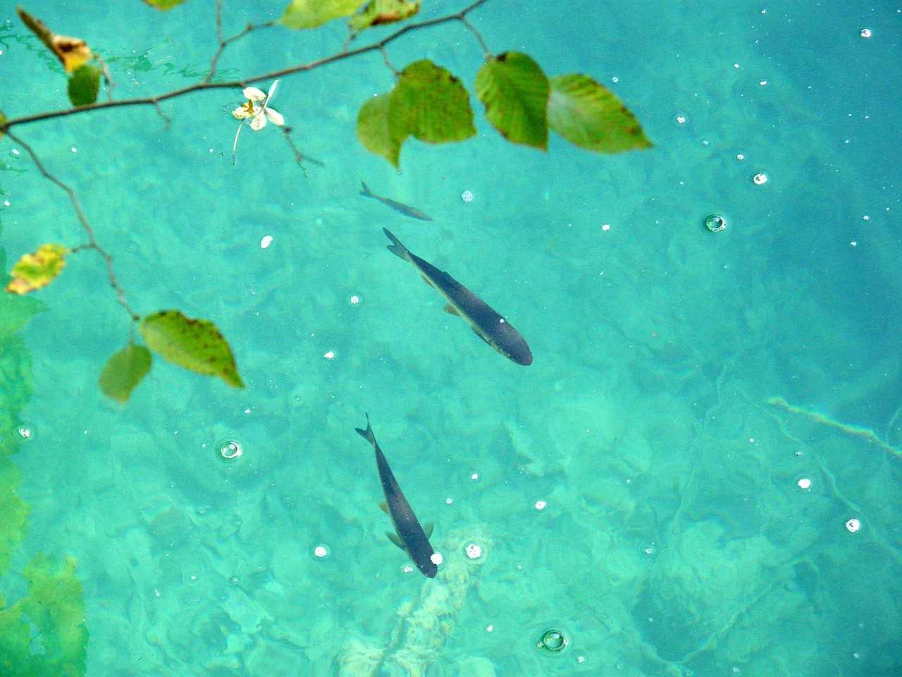 魚が楽しそうに泳いでる