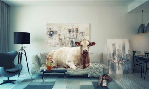 牛がソファーに!