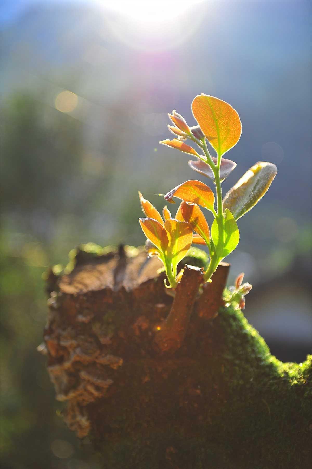 新たに芽を出す