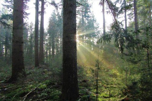 朝の森に日がさしている