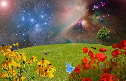 地球の植物・昆虫と宇宙のイメージ
