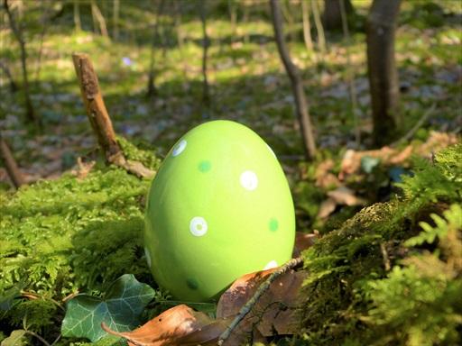 へなそうるの大きな卵?